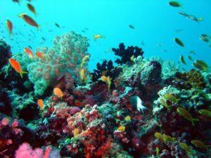 Отзывы туристов о Краби в Таиланде. Как извлечь иголки морского ежа?
