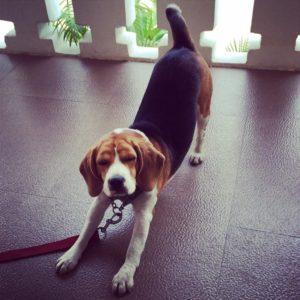 11 способов улучшить Вашу Собаку мордой вниз