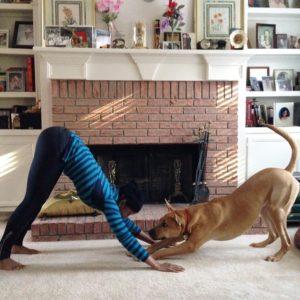 Базовые позы хатха йоги: собака мордой вниз