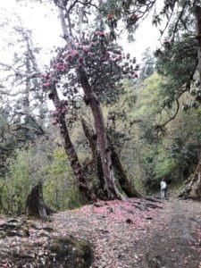 Йога походы и треккинг в Непале