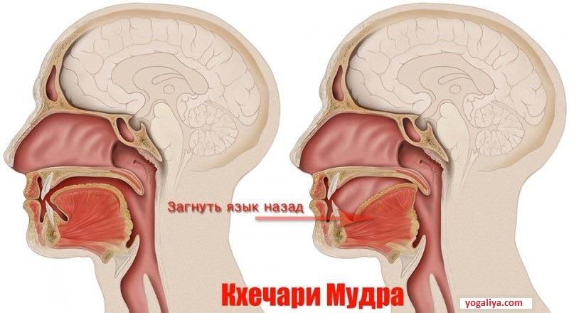 Кхечари-мудра