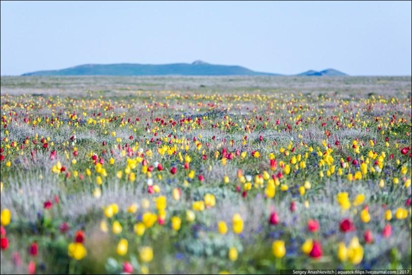 Крымская степь весной